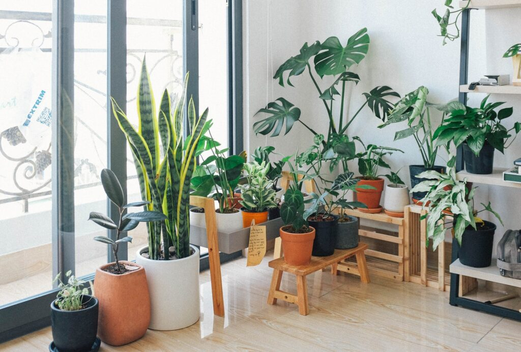 Best Tips to Decorate your House with Green Plants